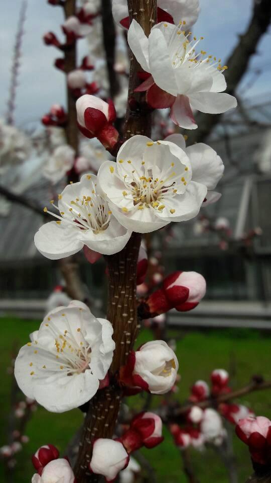 Citt nascosta milano il giardino della scienza l orto for Giardino botanico milano